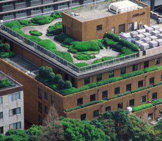 Dachgartenanlage