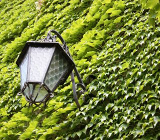 Lantern on a green ivy facade in Italy
