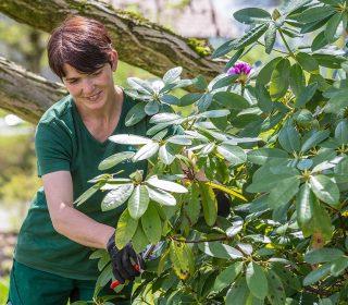 Liebevolle Gartenpflege
