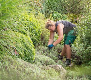 Gräserpflege