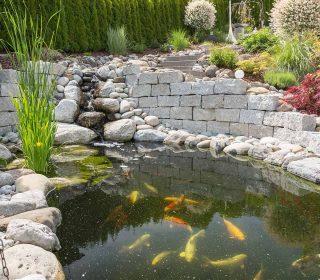 Koiteich mit Bachlauf und Natursteinmauer