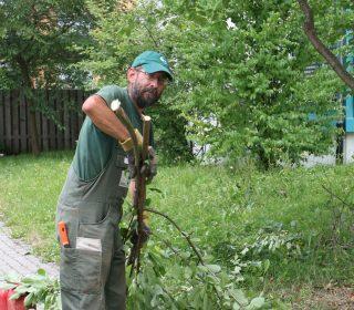 Haas Mitarbeiter bei der Baumpflege