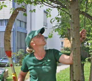 Haas Mitarbeiterin bei der Baumpflege