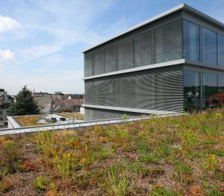 Dachbegrünung Gewerbegebäude