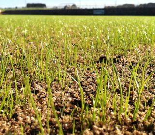 Neues Gras