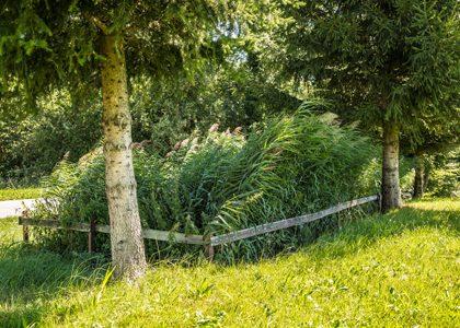 Galanet_Haas_Pflanzenklaeranlage_Aug15_HighRes_sRGB_4742_web_420x300