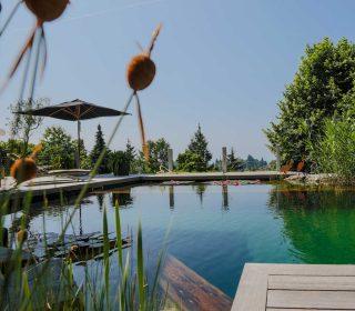 Blick vom Holzdeck auf den Schwimmteich