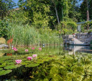 Swimming Teich mit Seerosen