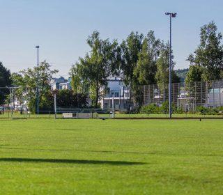 Sportrasen Fußballplatz