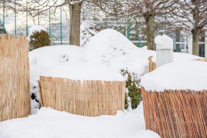 winterschutz bb