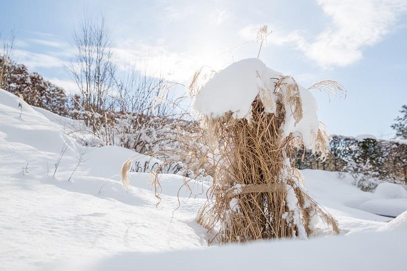 Winterschutz für Ihre Pflanzen – Tipps auf haas-galabau.de