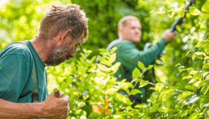 Vorarbeiter Gartenpflege (m/w/d)