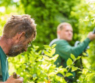 Vorarbeiter Gartenpflege